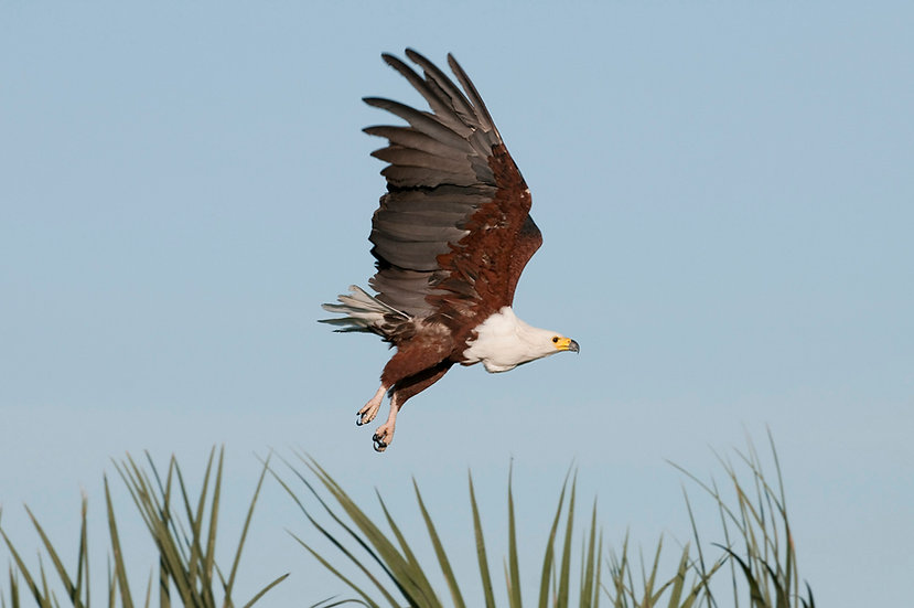 FISH EAGLE SAFARI - 5 Night