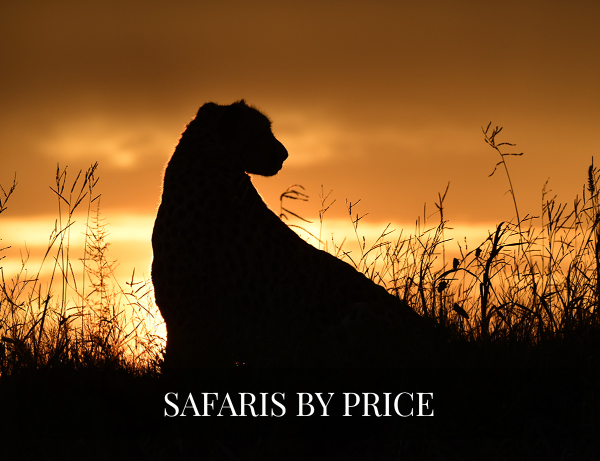 BOTSWANA SAFARIS BY PRICE