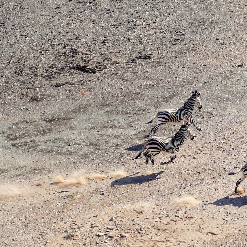 Desert zebra Sossusvlei