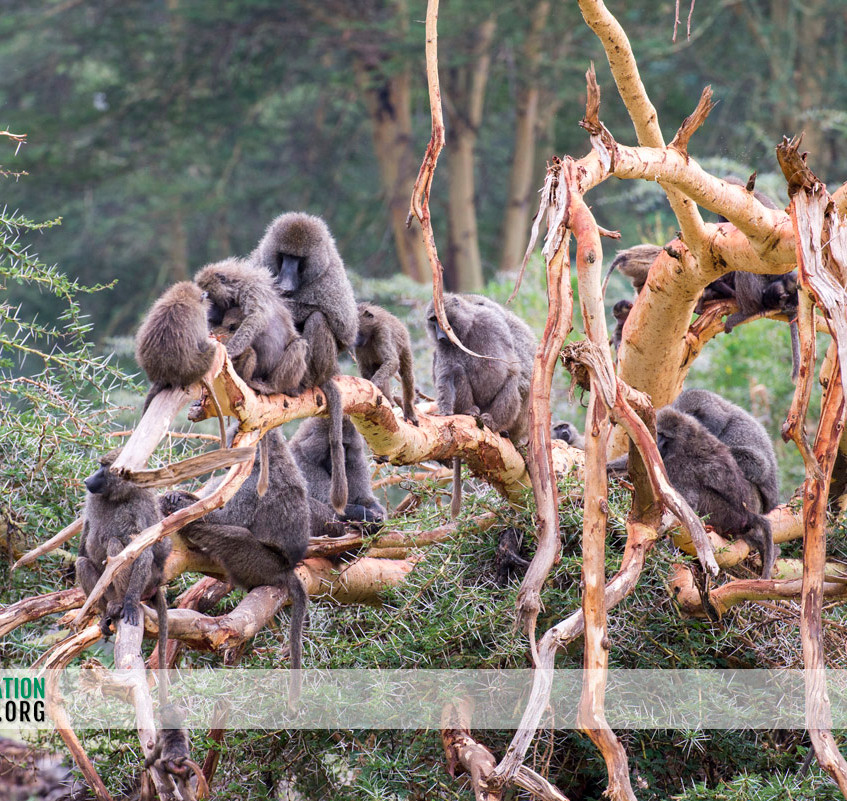 Ngorongoro Crater Jamie Thom 16