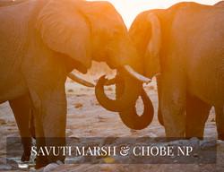 SAVUTI & CHOBE SAFARI