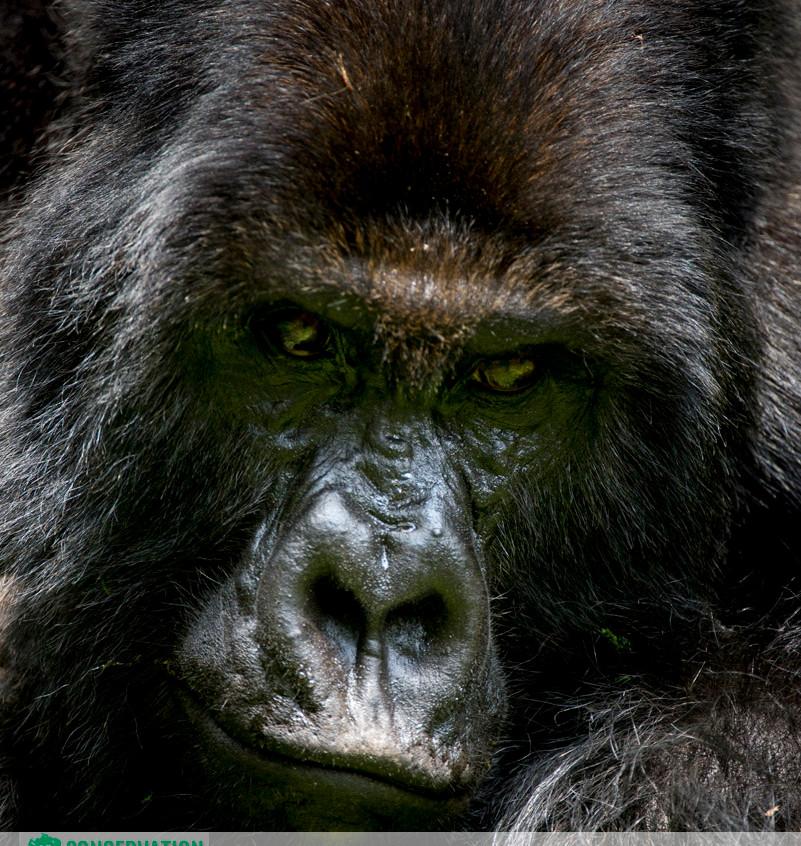 Rwanda Gorilla Safari 16