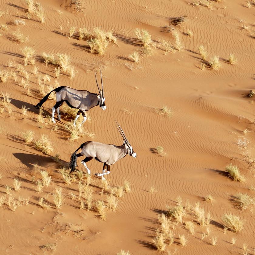 Oryx Namibia safari itinerary