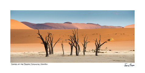 Shades of the Desert.jpg