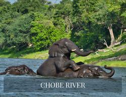 CHOBE RIVER BOTSWANA SAFARI