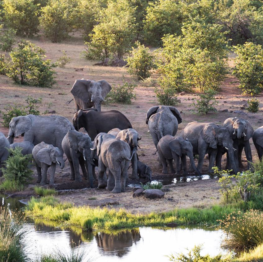 Botswana_Safari_Company__98A0045