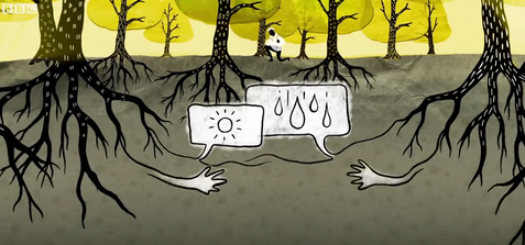 How trees secretly talk to each other