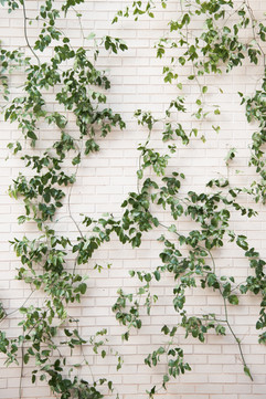 Gaylord Pickens Museum - Smilax Install - Summer Wedding - OKC