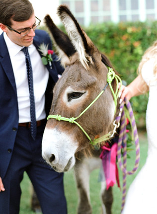 Wedding-Donkey-Bride-Groom