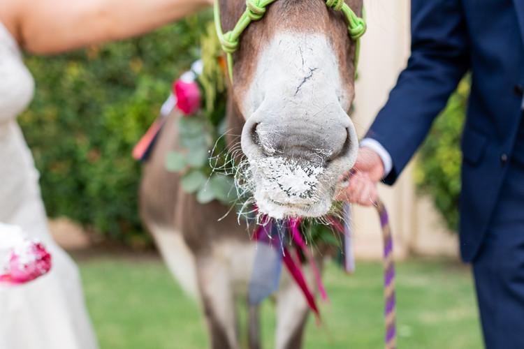 Special-Wedding-Guest-Meg-Owen-Events-Donkey.jpg
