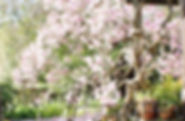 retreat-environs-magnolia-1.jpg