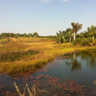 Wetlands in Ghana