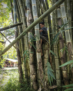 Bamboo instructor Rodolfo showing us how