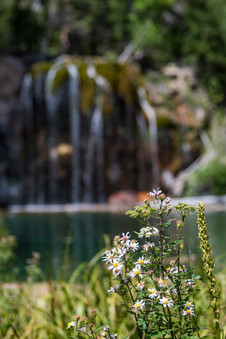 Hanging Lake Flowers