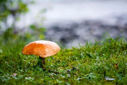 Mushroom by the Lake