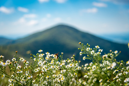 Blue Ridge Flowers