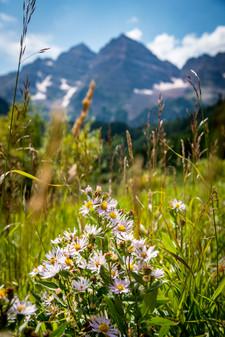Flowers by Maroon Bells