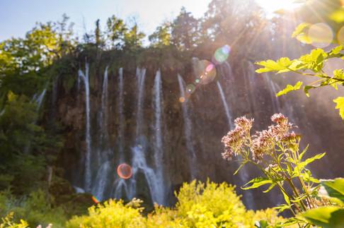 Plitvice Lake Flowers
