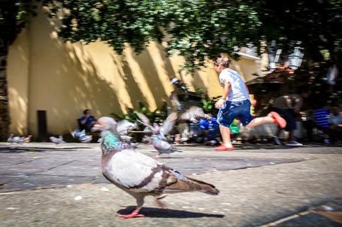 Playing with the Pigeons
