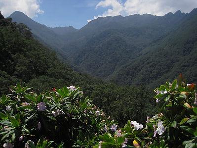 Cocorra Valley.jpg
