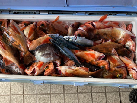 スタッフ竹中、お客様と知内沖のメバル釣り