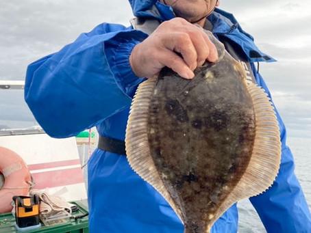 お客様達と八雲山崎沖にマガレイ釣り