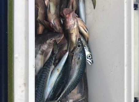 スタッフ干場、恵山沖にタラ&五目釣り
