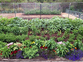 Long Beach Farms urban agriculture small lot raised beds aquaponics organic sustainable