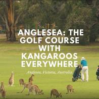 Kangaroos at Anglesea GC