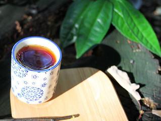 Чайні плантації під Мукачево