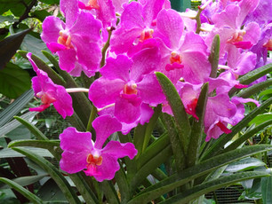 Fitzjohn's Orchids