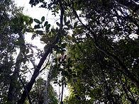 Forêt Madagascar.jpg