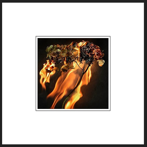 Burning Flora Print