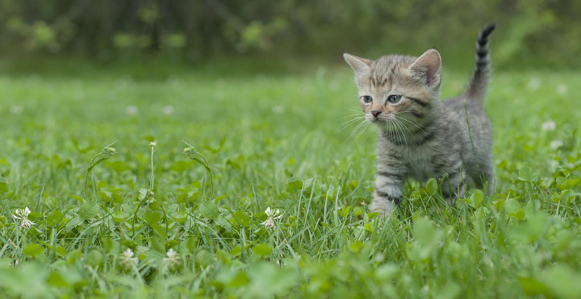 Bio Katzenstreu (1)