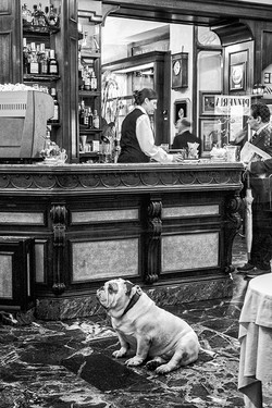 Bar Scene - Florence