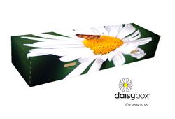 Daisybox Big Daisy