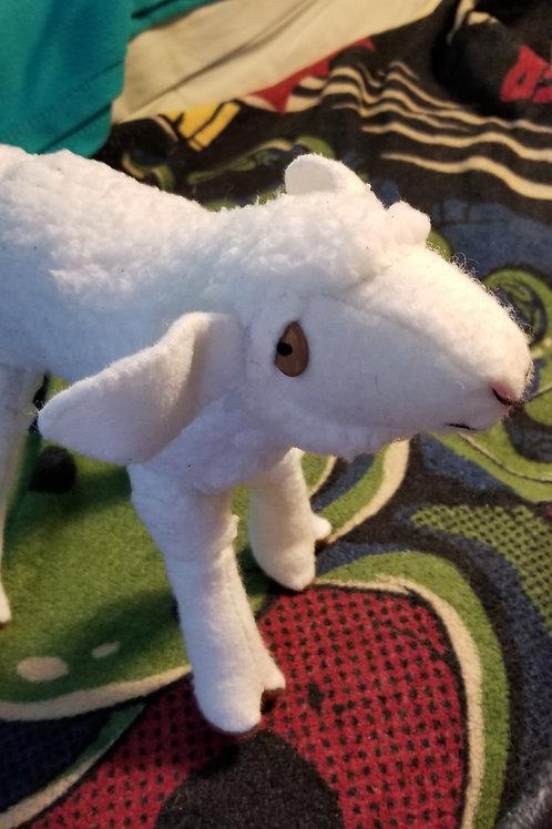 Pink Nosed Lamb