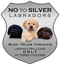 silver labs.jpg
