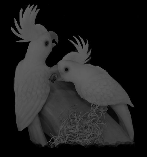 Kakadu-Paar-richtig-schwarz.jpg