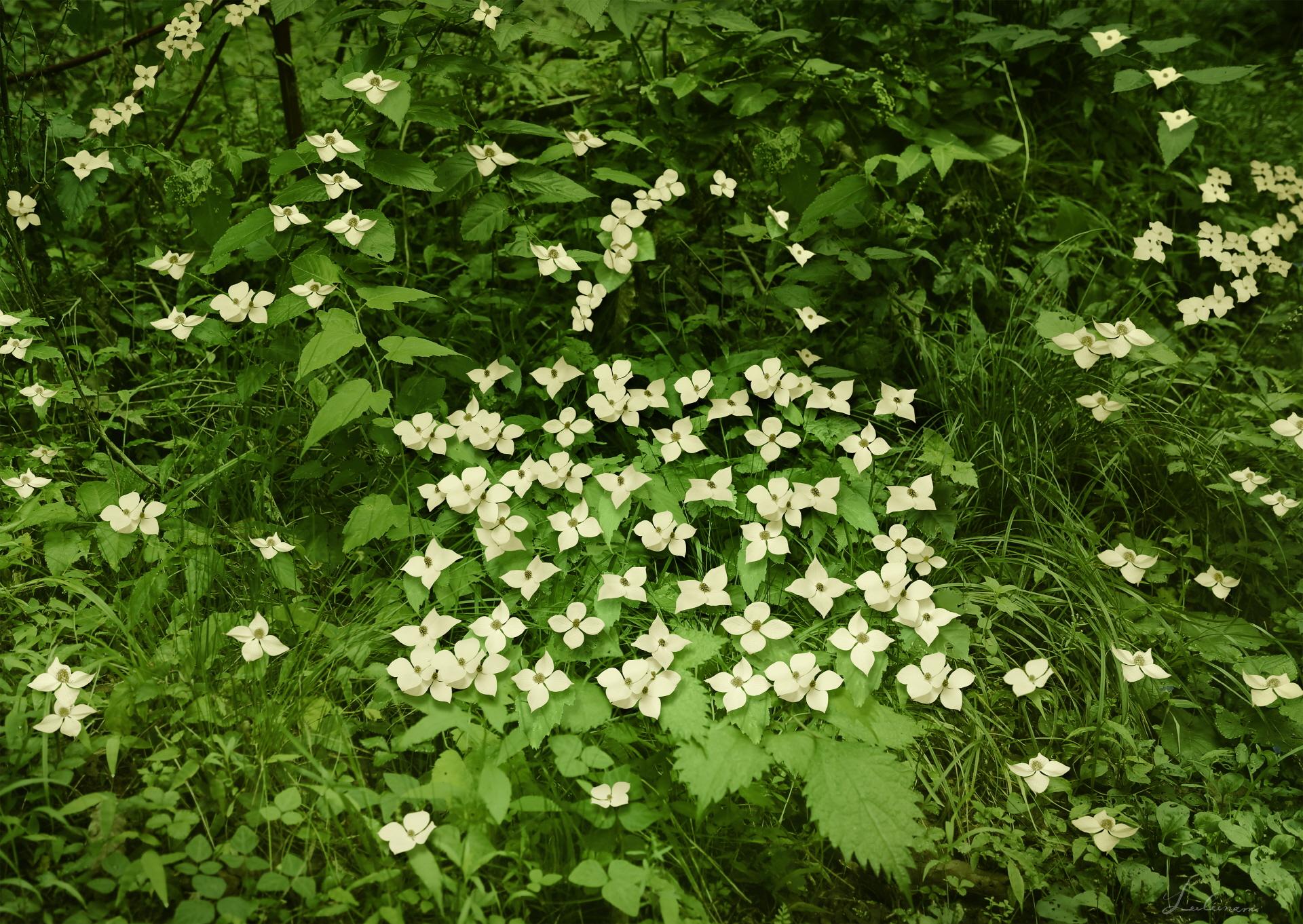 Lux-Flower 1 2014  C-PRINT 180x130cm