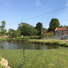 Looking back to the cottage from the duck pond