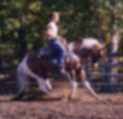 Reining Paint Stallion sliding home.