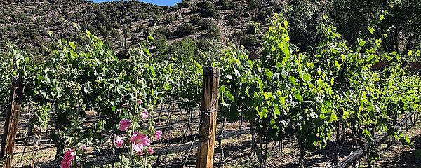 black mesa winery.jpg