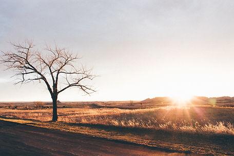 Tree at sunset, Badlands National Park, South Dakota, USA