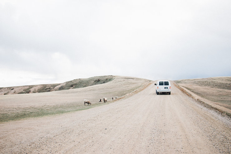 Car and bighorn sheeps, Badlands National Park, South Dakota, USA