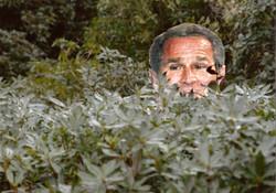 Bush In A Bush