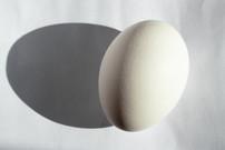 Single_egg_web.jpg