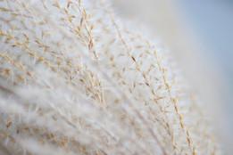 Grass_web.jpg