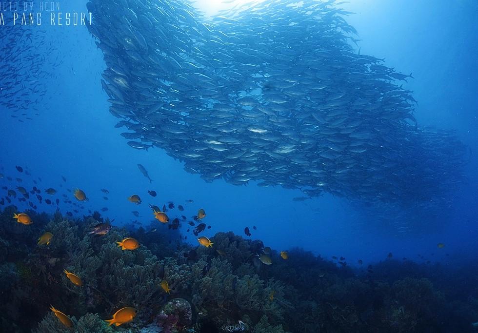 보홀 다이빙 04 - 라팡리조트 다이빙샵