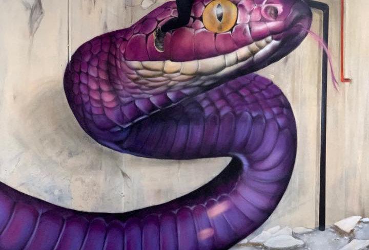 Scaf - Snake